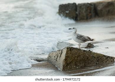 A thunderbird sits on the edge of a concrete slab on the beach.