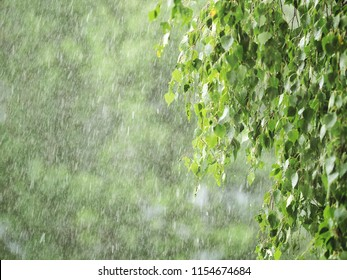 Thunderstorm with heavy hail and sleet showers in summer. Natural cataclysm. Rain with snow. Birch green branches in a hurricane, betula