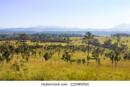 Thung salaeng Luang National Park . Savannah field and pine tree . Phetchabun and Phitsanulok province . Northern of Thailand . Landscape view .