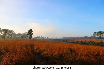 Thung Salaeng Luang is national park in Phitsanulok and Phetchabun Provinces , Thailand. taking photo by camera smart phone.