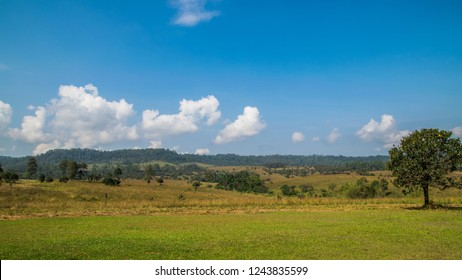 Thung salaeng Luang National Park . Savannah field and pine tree . Phetchabun and Phitsanulok province . Northern of Thailand . Landscape view
