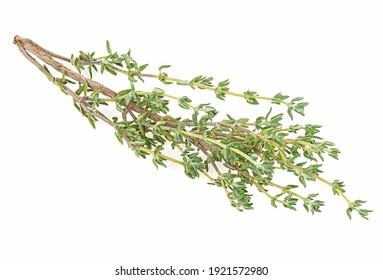 Thym Images Photos Et Images Vectorielles De Stock Shutterstock
