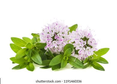 thyme flowers isolated on white background