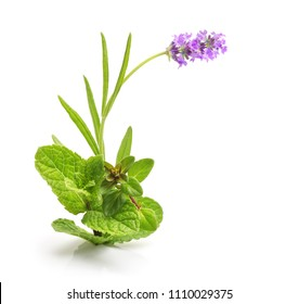 Thyme fresh herb,lavender and mint isolated on white background