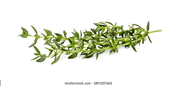Thyme  fresh isolated on white background. Spice closeup.