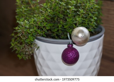 thyme grows in a white pot, wooden background. - Shutterstock ID 1973509775