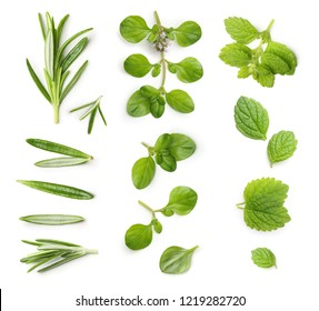 Thyme,rosemary twig and mint isolated on a white background