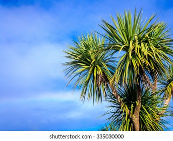Ti kouka â?? New Zealand cabbage palm tree, landscape with a blue sky