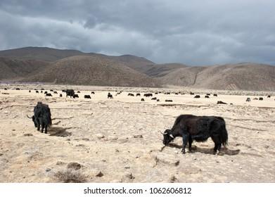Tibet plateau landscape (China)