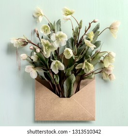 Tibetan hellebore flower in envelope