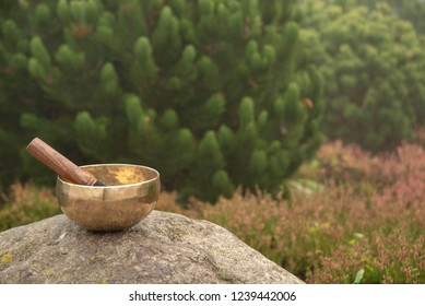The Tibetan singing bowl stands on top of a stone against the background of the beautiful nature of blurred flowering heather and beautiful young pine. Singing bowl in nature.