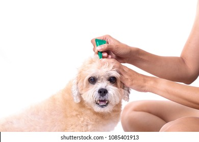 tick and flea prevention for a dog isolated on white background
