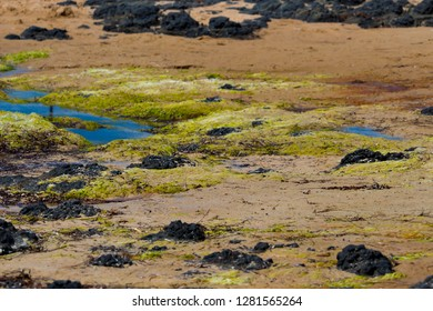 Tide ebbing out at Ocean Beach Bunbury, Western Australia on a fine morning in late winter leaves white foam amongst the  green slimy lichen covered dark basalt rocks.