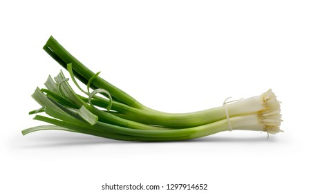 Tied bunch of fresh green onion isolated on white background