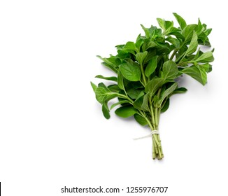 tied fresh oregano isolated over white background with clipping path and copy space