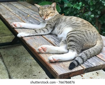 A tiger cat sleeps on long wooden chair.