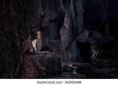The tiger in dark tone