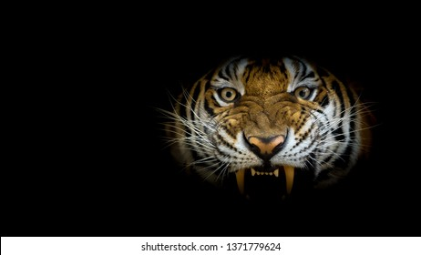 Tiger face fierce on black background. (Panthera tigris corbetti) in the natural habitat, in Thailand.
