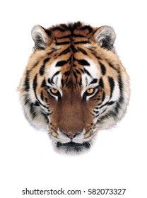 Tiger face isolated at white