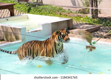 Cat Pool Images, Stock Photos & Vectors | Shutterstock