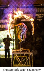 Tiger Jumps Through Ring of Fire.