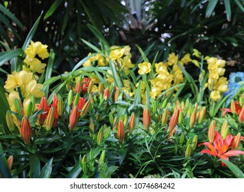 tiger lily blossoms with yellow orchids