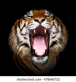 Tiger Opens his mouth.