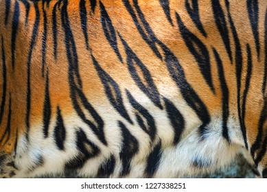 Tiger pattern / Beautiful real bengal tiger texture skin black orange stripe pattern for background