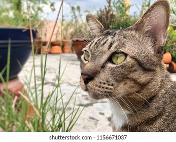 Tiger pattern cat with yellow eyes, looks in front and sits in natural garden with tree
