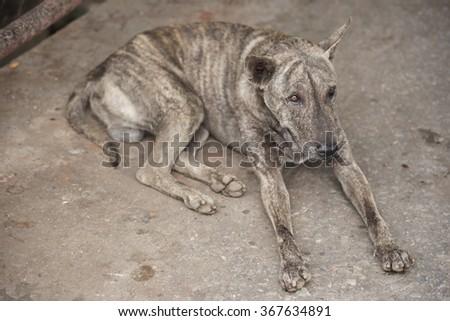 Tiger Pattern Homeless Dog Sleep On Stock Photo Edit Now 60 Cool Dog Sleep Pattern
