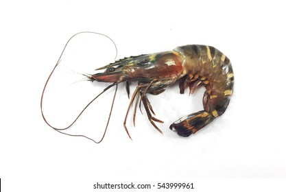 Tiger prawn isolated on white background