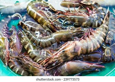 Tiger prawn, Penaeus monodon, Giant Tiger Prawn