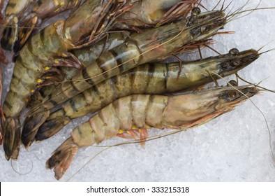 Tiger prawns. Raw tiger shrimp on ice at the  seafood  market. Selective focus