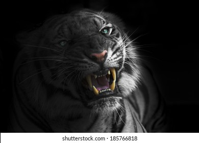 1000 Tiger Attack Stock Images Photos Vectors Shutterstock