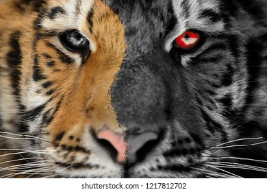 Tiger scary horror portrait. Halloween or ghost style