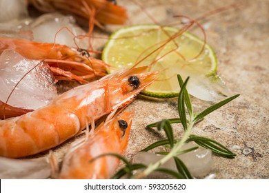 Tiger shrimps with lime, lemon, rosemary and black pepper spices on stone background. Fresh tasty prawns ready to be cooked.