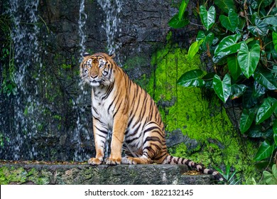 The tiger is sitdown in front of mini waterfall at thailand