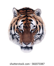 Tiger's angry face isolated at white