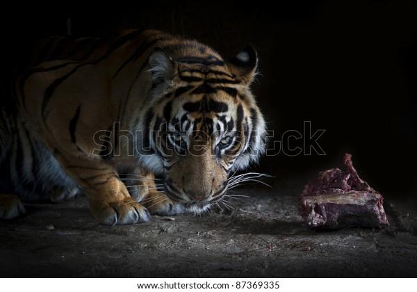 Tigers dinner