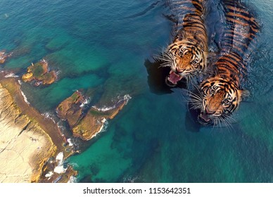 Tigers in the sea