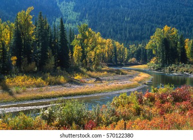 Tight landscape of a beautiful river bottom with the trees and brush in Autumn colors. Conifer trees are intermingled with mostly cottonwood trees. Image is bathed in sunshine from a gorgeous fall day
