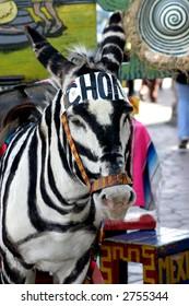 Tijuana donkey, camouflaged as a zebra
