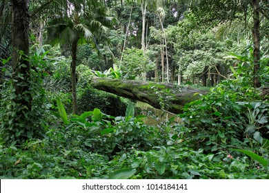 Tijuca Forest Rio de Janeiro, the largest urban forest in the world