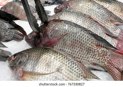 tilapia fish fresh selection black raw fish nile tilapia freeze ice on ice at the fresh fish on ice market frozen nilotica.