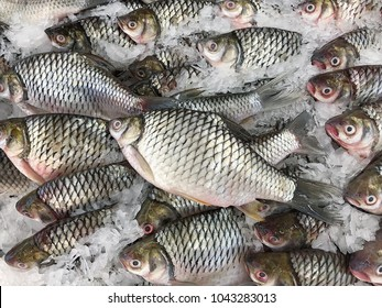 Tilapia, Fish in the market.