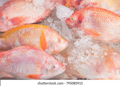 Tilapia Fish on ice in the market Thailand