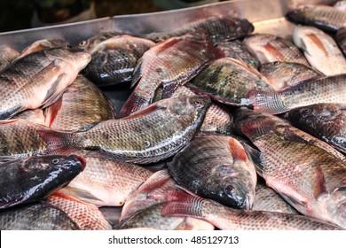 Tilapia fresh fish