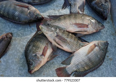 Tilapia is a very tasty fish.