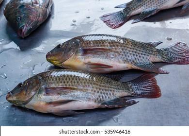 Tilapia,fish.
