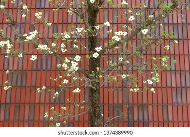 Tile outer wall and spring flower
